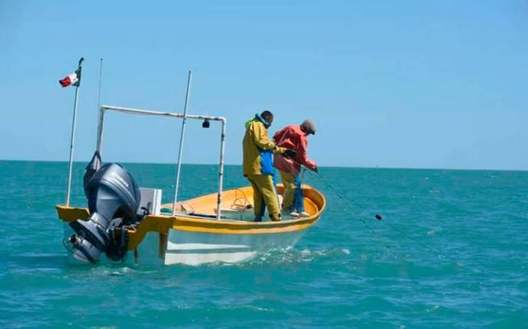 Rompen veda del camarón en Alto Golfo de California