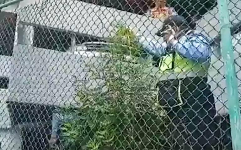[Video] Encuentran planta de marihuana en jardinera del AICM
