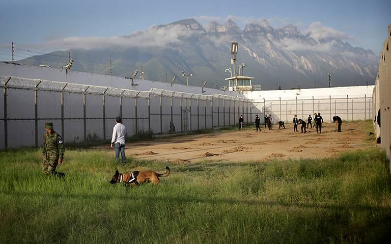 Con perros y radares, agentes buscan fosas clandestinas en penal de Topo Chico