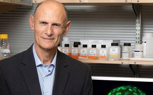 Crean embriones artificiales con una sola célula de la oreja de un ratón