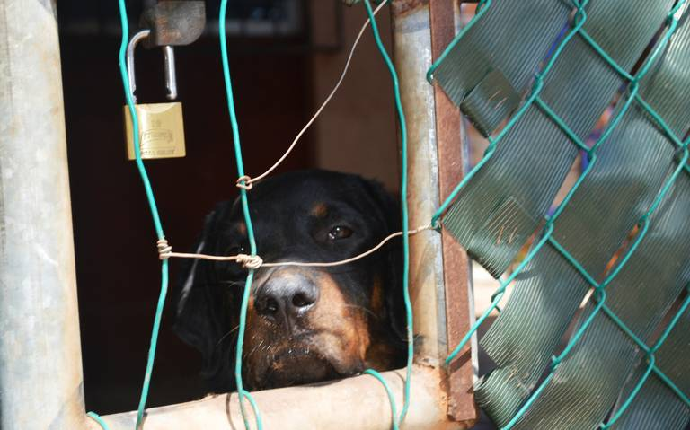 Proponen castigar con tres años de cárcel a personas que maltraten animales