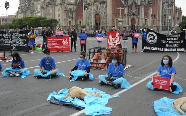 Protestan activistas contra maltrato animal frente a Palacio Nacional