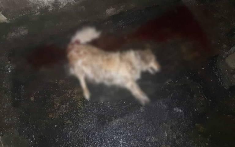 Perrita muere al ser aventada de quinto piso en alcaldía Cuauhtémoc
