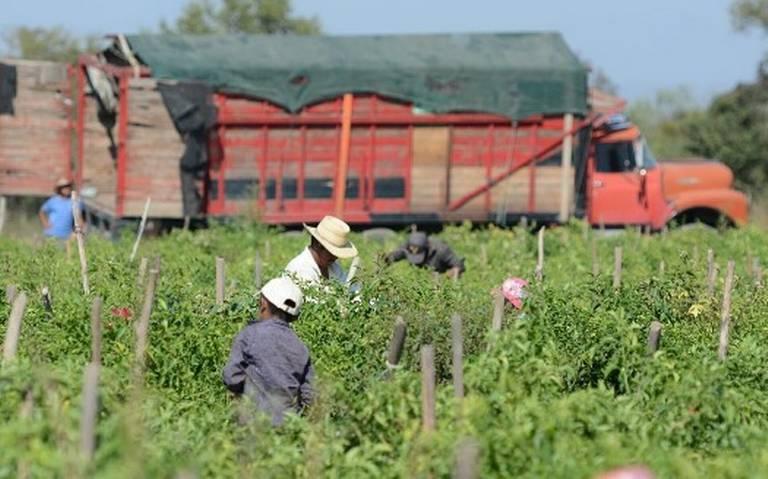 En riesgo, el sector agropecuario en Sinaloa