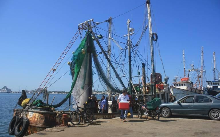 Ante bajas capturas en Sinaloa, caerá exportación de camarón un 50%