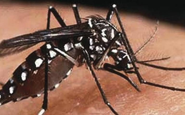 Jalisco confirma 4 muertes más por dengue