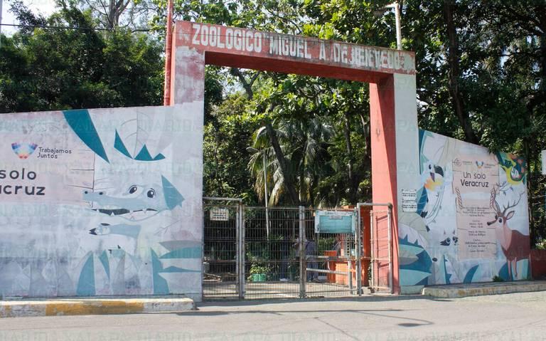 Sucio y maloliente, zoológico de Veracruz resguarda a 45 especies