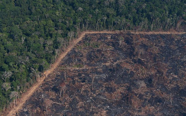 Deforestación en Amazonas alcanza mayor nivel en más de una década