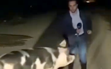 Puerco persigue y muerde a reportero durante enlace en vivo