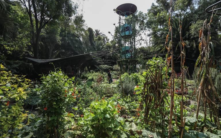 Resistencia ambiental en el Huerto Roma Verde, un aliento de vida en la CDMX