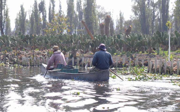 Rehabilitarán en 2020 zona chinampera de Xochimilco