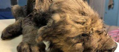 Encuentran un cachorro de 18 mil años de antigüedad en Rusia