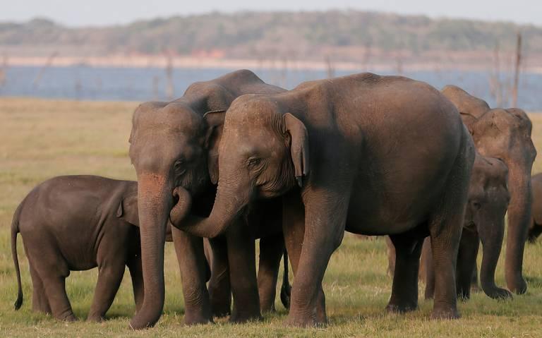 Mueren 200 elefantes de hambre en el mayor parque de Zimbabue