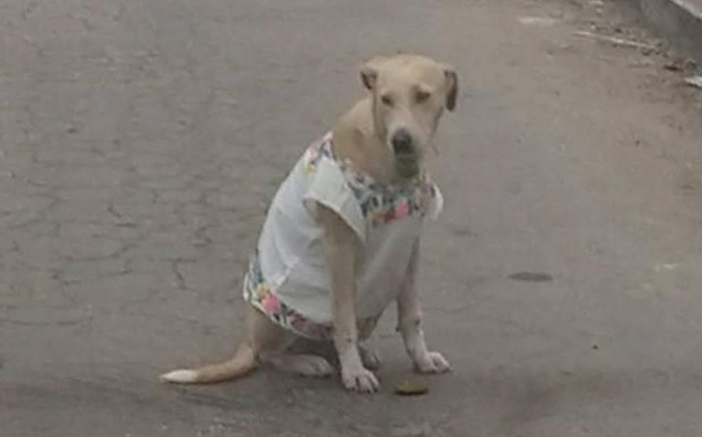 ¡Perrito supercalientito! Ella es Polita y nunca sale a pasear sin su huipil