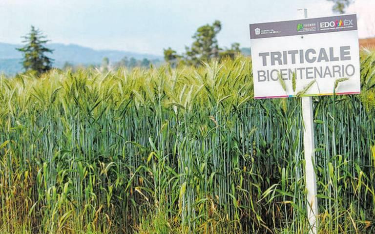 Icamex innova en favor de la agricultura