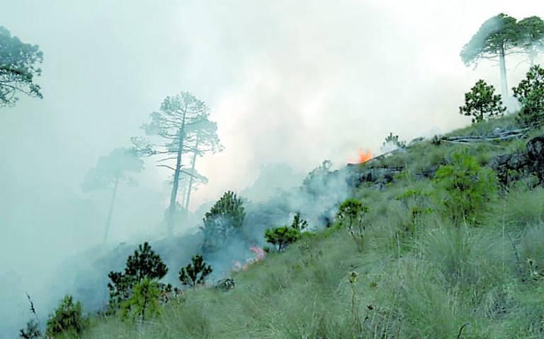 Incendio forestal daña 20 hectáreas del Cofre de Perote, en Veracruz