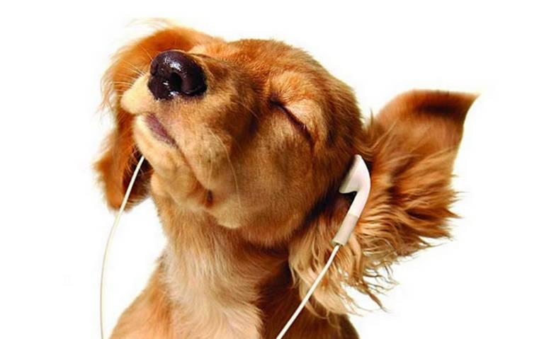 ¡A maullar y ladrar! Spotify lanza listas para mascotas que se quedan solas en casa