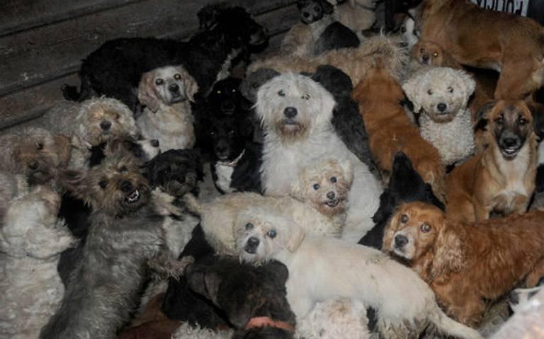 Rescatan a 40 perritos hacinados en una casa de la alcaldía Cuauhtémoc