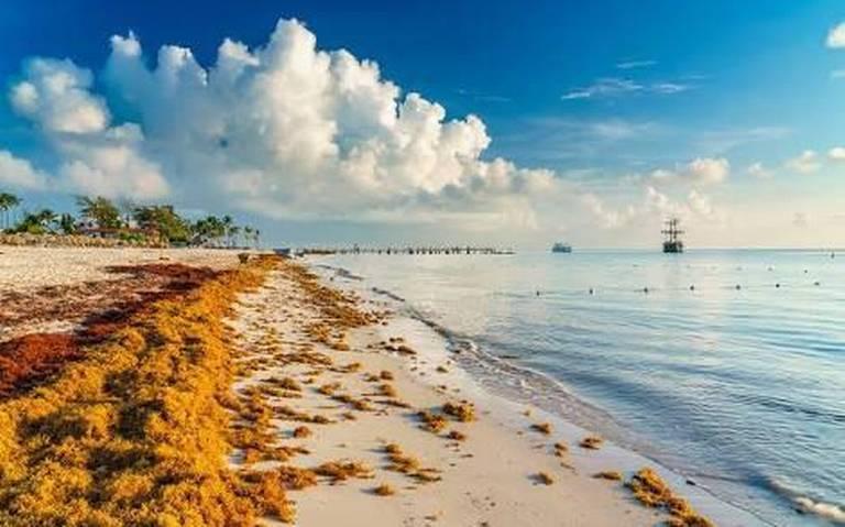 Prevén menos sargazo para este año en Quintana Roo