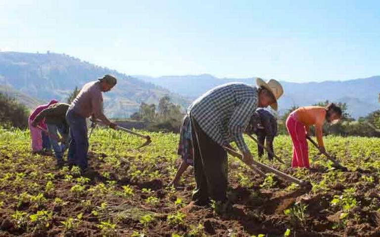 Quince millones de mexicanos con trabajo asalariado carecen de seguridad social