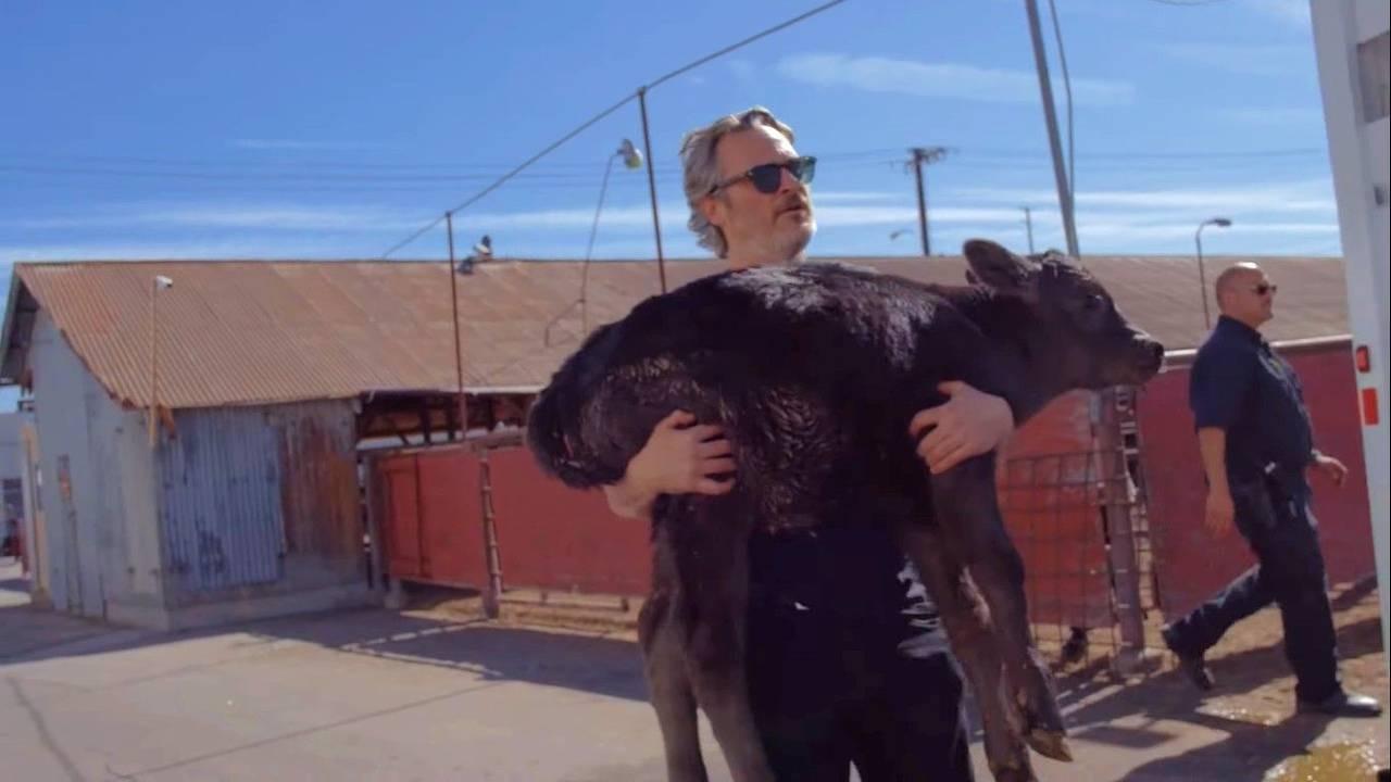 Joaquin Phoenix rescata a una vaca y a su ternero de un matadero