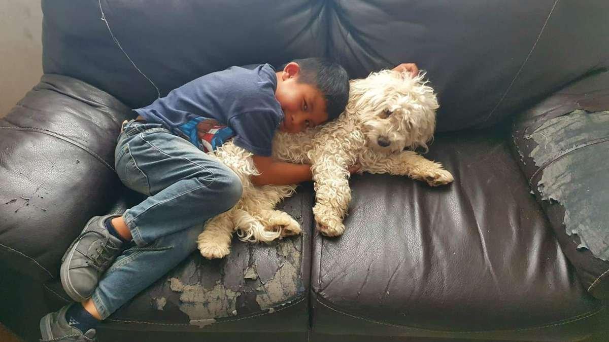 Niño que lloraba por su perro perdido ¡lo encuentra!