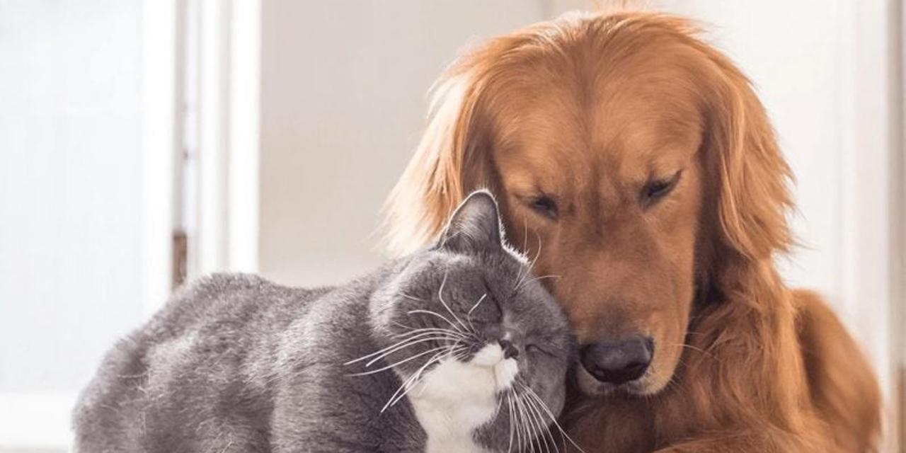 Animales no representan riesgo para el contagio del COVID-19