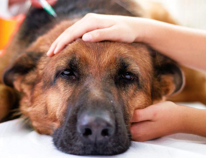 Emiten recomendaciones a enfermos de COVID-19 que tengan animales de compañía