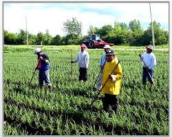 México y Canadá acuerdan mejorar protección sanitaria de trabajadores agrícolas temporales en ese país