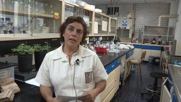 Con planta mexicana desarrolla IPN insecticida contra mosquito transmisor del dengue