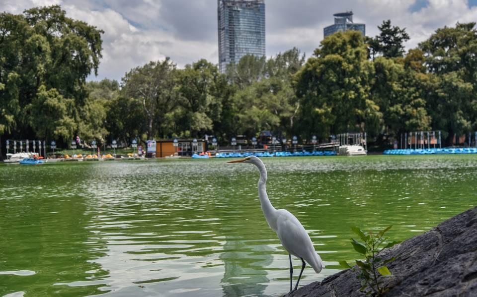 Así fue la reapertura del Bosque de Chapultepec rumbo a la Nueva Normalidad