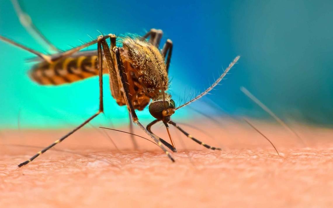 IMSS llama a que población acuda a unidades médicas en caso de presentar síntomas por dengue