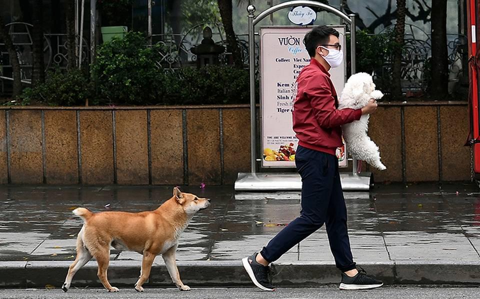 ¡Falso! que nuestras mascotas nos puedan transmitir COVID-19