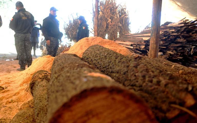 Profepa propone que la tala de árboles sea delito grave