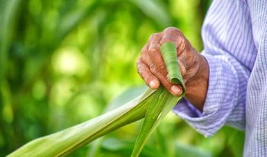 Enfoque agroecológico permitirá superar rezago social de comunidades indígenas
