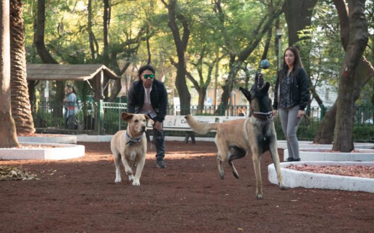 Si se construirán áreas caninas en la Alcaldía Cuauhtémoc