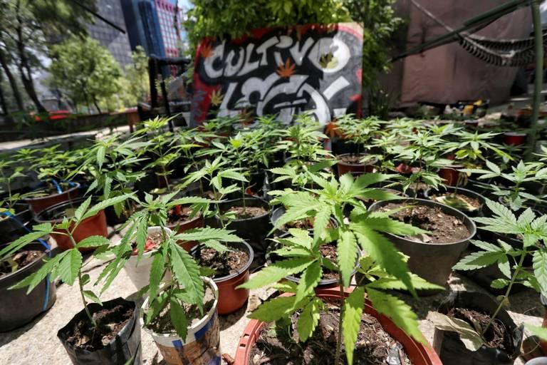 Prórroga a Congreso para legislar el uso lúdico de marihuana