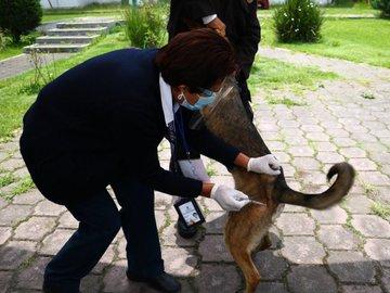 Instituto de Salud del Estado de México exhorta a a proteger mascotas y vacunarlas