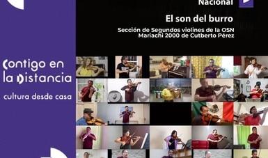 Violinistas de la Orquesta Sinfónica Nacional interpretan desde casa un arreglo del son El burro