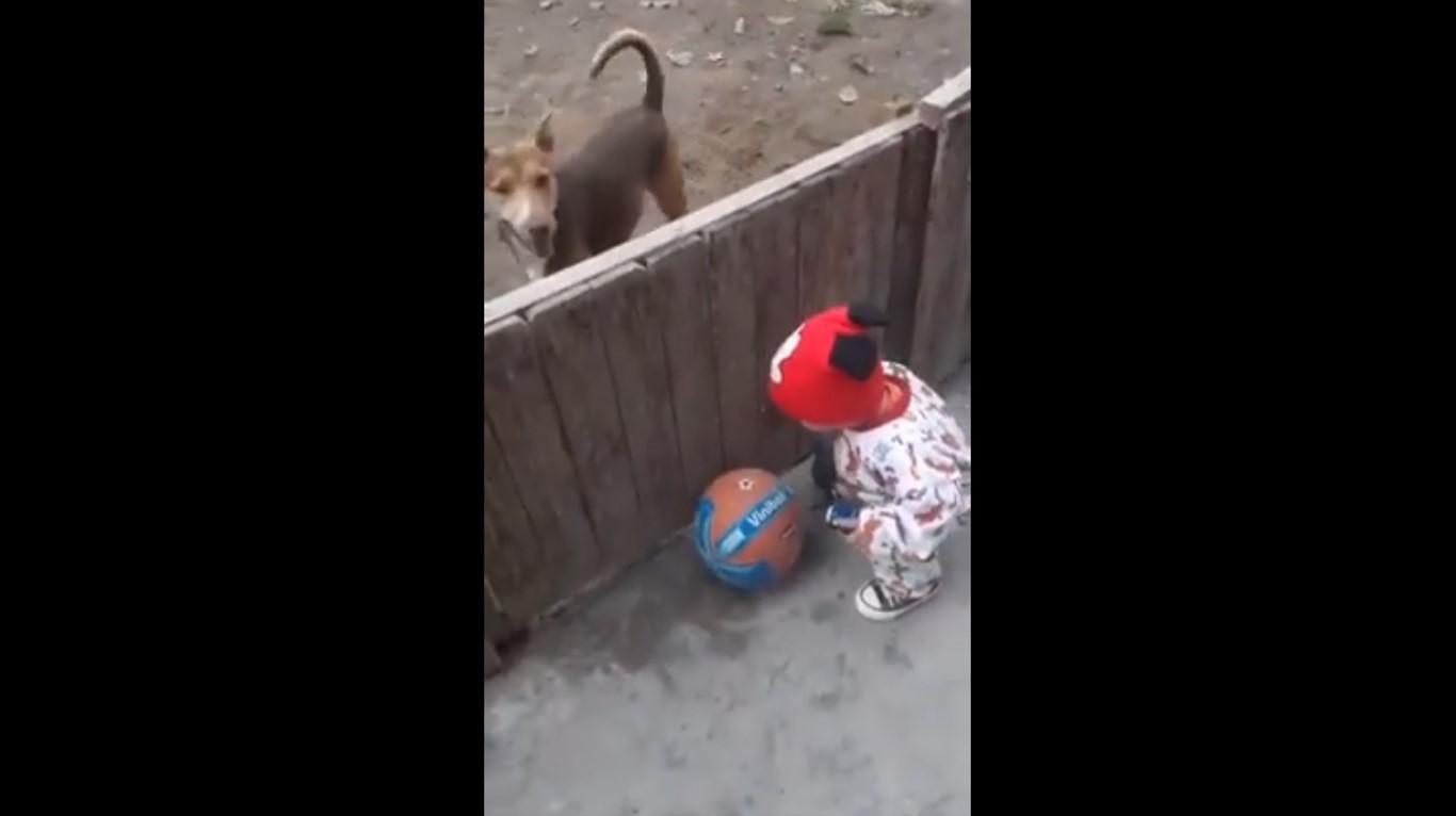 ¿Y ese balón? vídeo viral de una niño jugando con sus perros