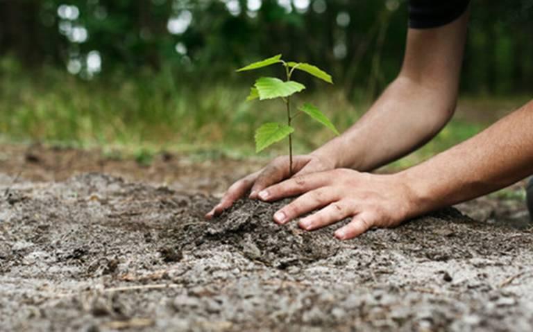 Plantan arboles en el bosque de Nativitas