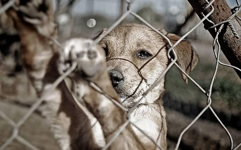Autoridades podrán entrar a casas para rescatar animales maltratados