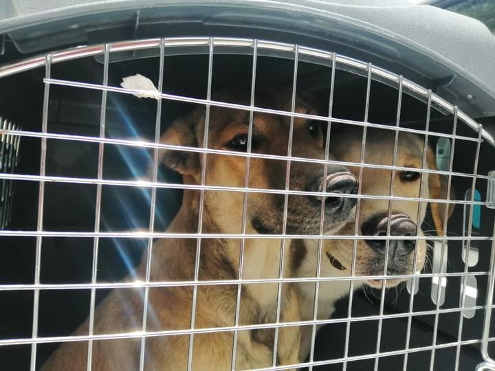 """Fue detenido """"El mata perros"""" de la alcaldía Cuauhtémoc"""