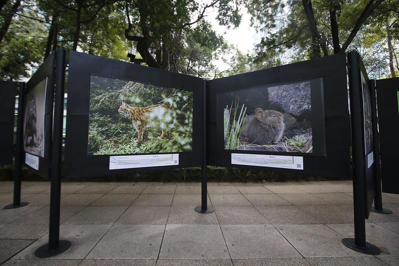 Amplían exhibición de muestra fotográfica sobre biodiversidad y cambio climático en el Paseo de las Culturas Amigas