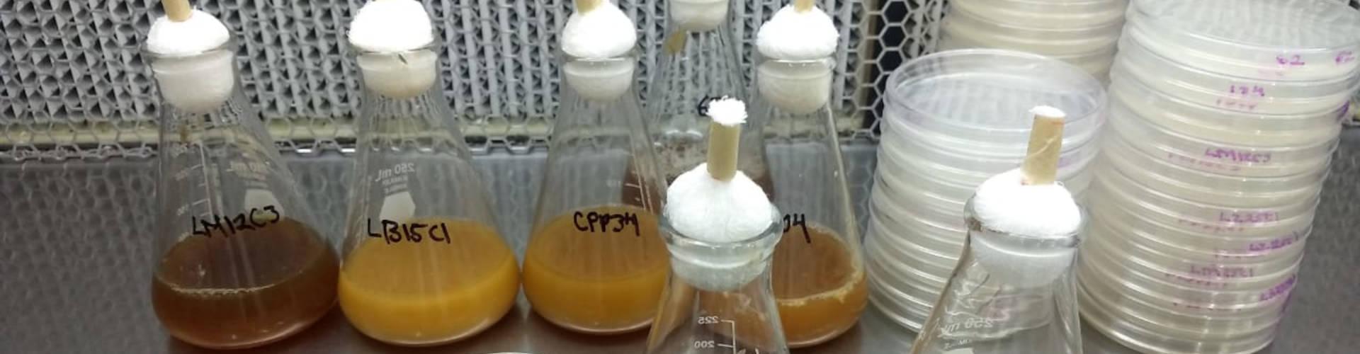 Estudia IPN contaminante que afecta el sistema endócrino
