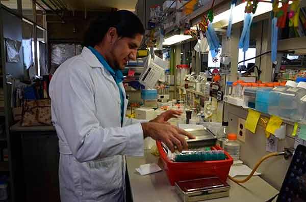 Desarrollan fármaco contra inflamación causada por enfermedades crónicas