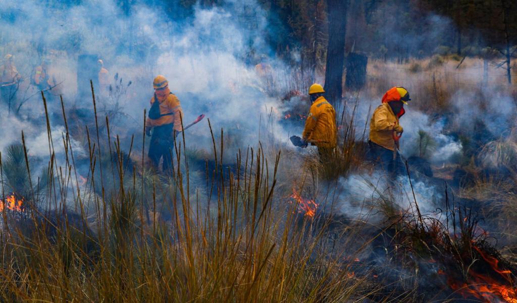 Disminuye 48.69% área afectada por incendios forestales durante 2020