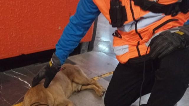 Personal del Metro rescata a perrito en vías de Zaragoza, L-1