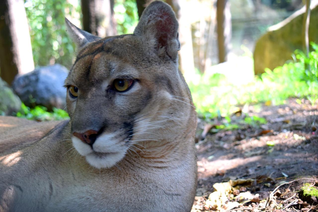 Con 13 nacimientos en 2020, Zoológico Los Coyotes celebra 22 años de existencia