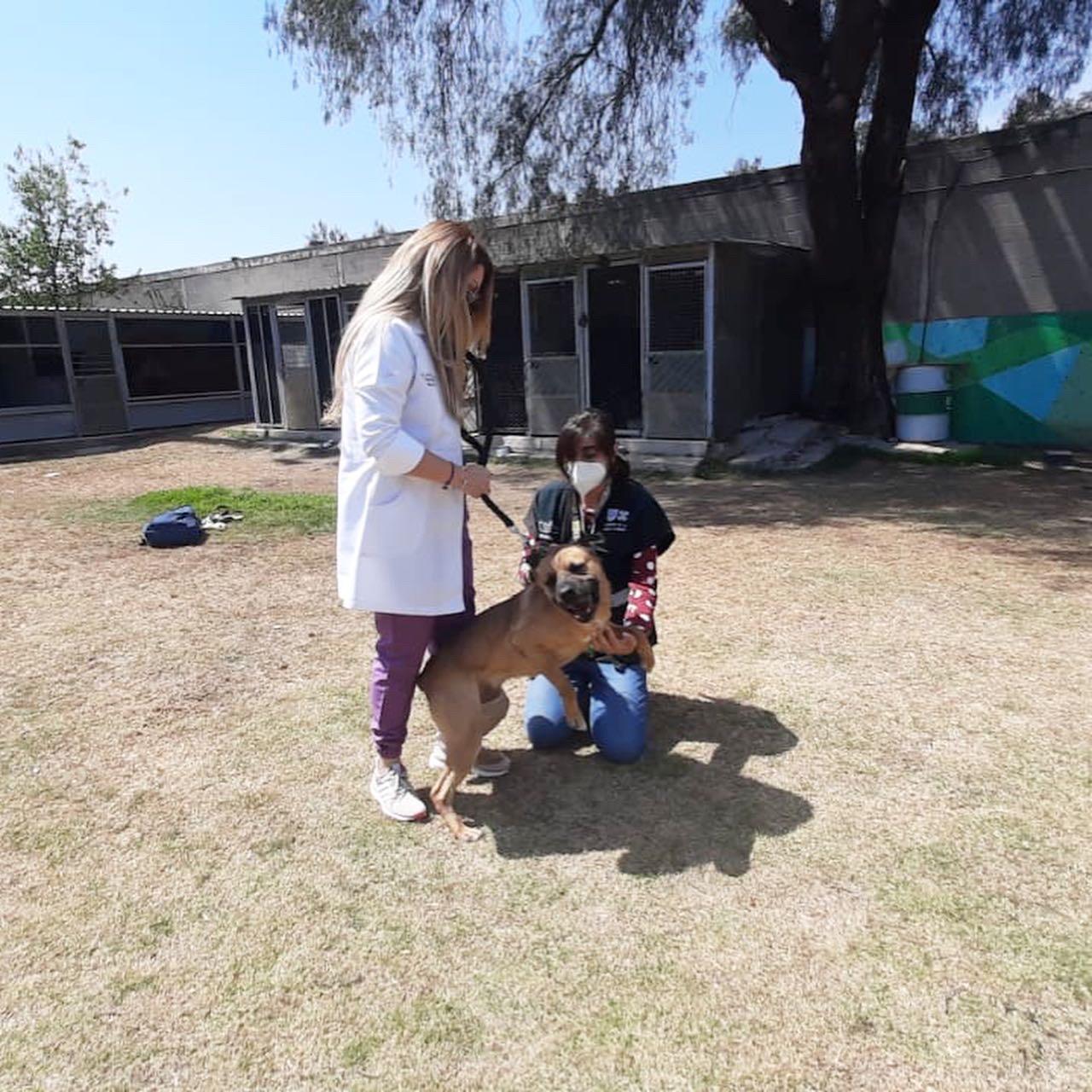 Elmar, un can del CTC apoyará a niños con necesidades de educación especiales